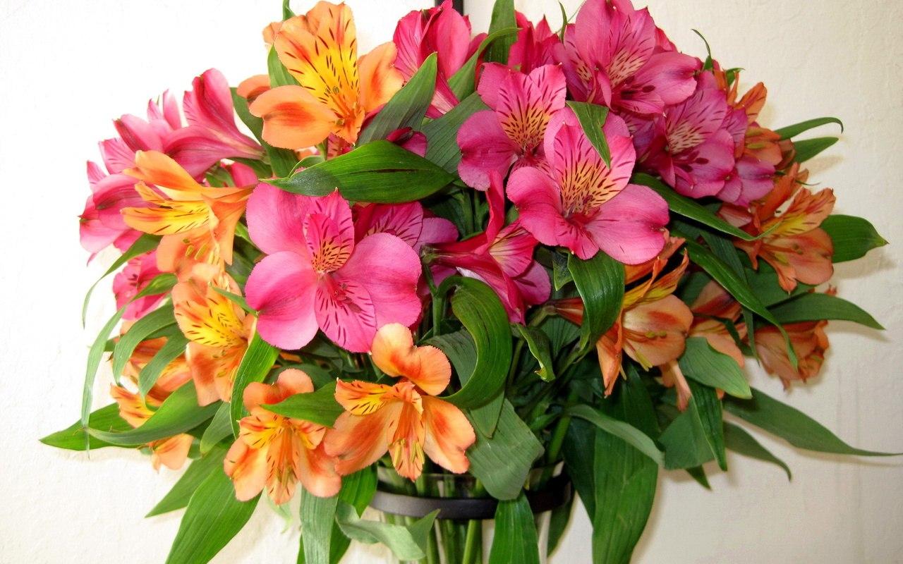 Друзья, приглашаем вас на семинары по флористике!